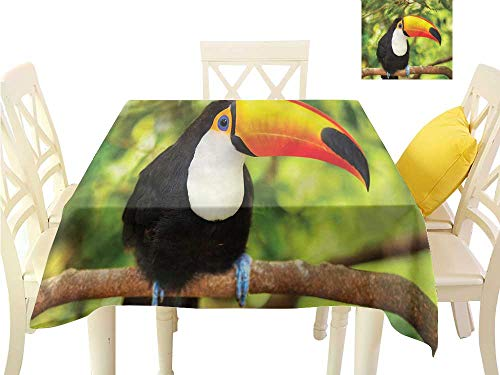 WilliamsDecor Square Tablecloth Jungle,Toucan Parrot Rainforest Dinning Tabletop Decoration W 50