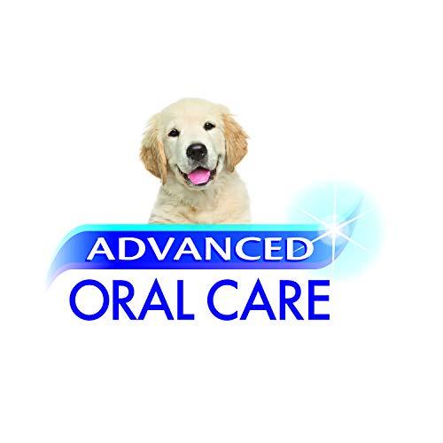 Nylabone Advanced Oral Care Puppy Dog Dental Kit