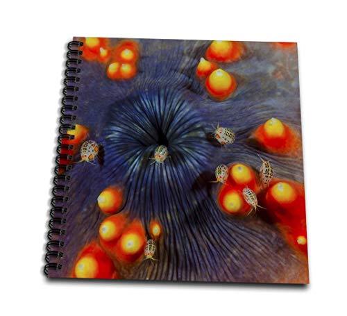 Danita Delimont–ジェインズ・ギャラリー–Marine Life–インドネシア、Komodo NP。のクローズアップostracods on Sea Cucumber。–Drawing Book 4 x 4` db_188449_3