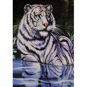 korean white tiger wwwimagenesmycom