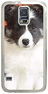 Animals & Birds Shetland-Sheepdog-Puppy Cases for Samsung Galaxy S5 I9600 with Transparent Skin