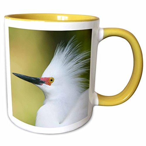 3dRose Danita Delimont - Birds - FL, St. Augustine Alligator Farm, snowy egret bird - US10 BJA0142 - Jaynes Gallery - 11oz Two-Tone Yellow Mug - Outlet St Fl Augustine