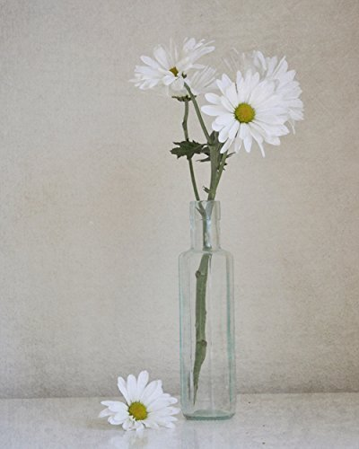 Country Rustic Shabby Chic Wall Art White Flower Photography Daisy Print Neutral