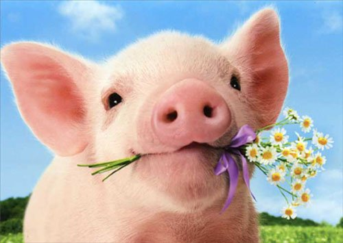 Pig Holds Flowers Standout Stand Out Pop Up Valentine's Day Card