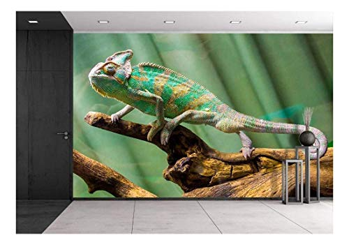 - wall26 - Chameleon - Removable Wall Mural | Self-Adhesive Large Wallpaper - 66x96 inches