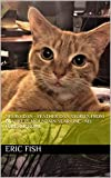 Neuro Dan - Feather Dan Stories from Blankets Mountain Year one - My Forever Home - Kindle edition by Fish, Eric, Fish, Amanda. Crafts, Hobbies & Home Kindle eBooks @ Amazon.com.