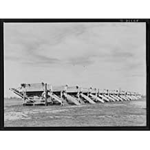 Photo: Battery of pea shellers near Mercedes, Texas . Size: 8x10 (approximately)