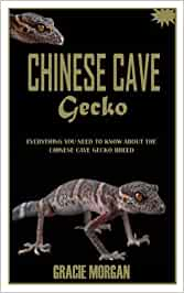 CHINESE CAVE GECKO: Everything You Need To Know About the Chinese Cave Gecko Breed