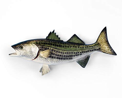 "Land & Sea Taxidermy Quality 18"" Fiberglas Striped Bass Wall Mount from Land & Sea"