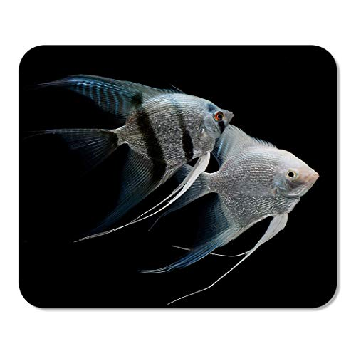 - Suike Mousepad Computer Notepad Office Silver Angelfish Angel Fish Freshwater Aquarium Black Scalar Animal Home School Game Player Computer Worker 9.5x7.9 Inch