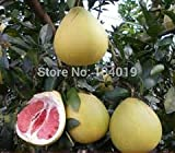 100 Pcs/bag, Balcony Patio Potted Fruit Trees Planted Seeds, Grapefruit Seeds