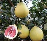 100 Pcs/bag, Balcony Patio Potted Fruit Trees Planted Seeds, Grapefruit Seeds