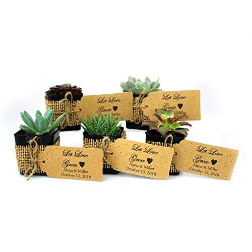 NW Wholesaler - Live Succulent Plant Wedding Party