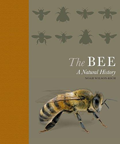 The Bee: A Natural History - Rich Natural