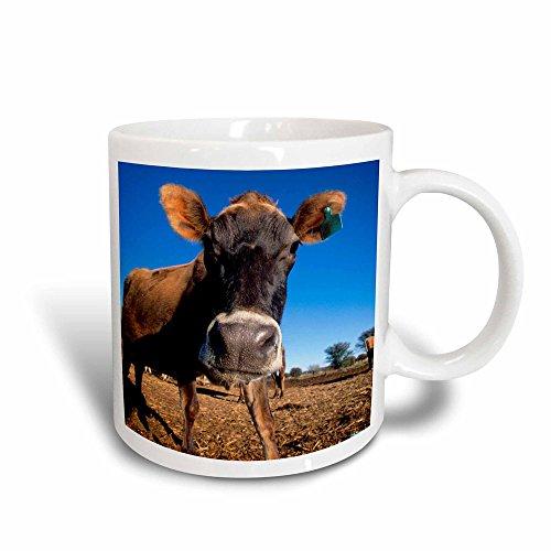 3dRose 206664_3 Eastern Meadowlark, Sturnella Magna, Bathing Starr, Texas, Usa Magic Transforming Mug 11 oz (Meadowlark Three Light)