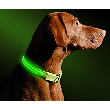 "LED Dog Collar - USB Rechargeable - Available in 6 Colors & 6 Sizes - Makes Your Dog Visible, Safe & Seen - Green, Medium (16 – 20"" / 41 – 53cm)"