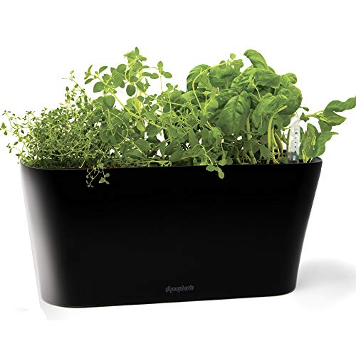 Aquaphoric Herb Garden Tub - Self Watering Passive Hydroponic Planter + Fiber Soil, Keeps Indoor Kitchen Herbs Fresh and Growing for Weeks on Your Home Windowsill. Compact, Attractive and Foolproof. (Best Plants For Garden Window)