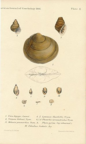 (Shells plate 10 1866 Philadelphia original antique conch shell color print)