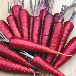 Purple Dragon Carrot Seeds ? Organic NON-GMO Purple Dragon Carrot Seeds (350+ Seeds) ? by PowerGrow Systems