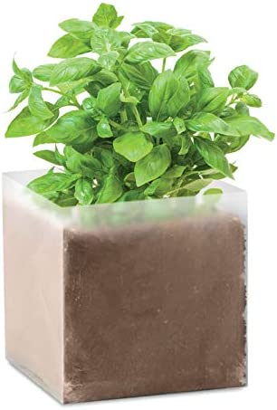 graines de jardin graines aromatiques menthe basilic et persil ajoutant 300 ml deau pour 1 litre dengrais de jardin Graines en lot