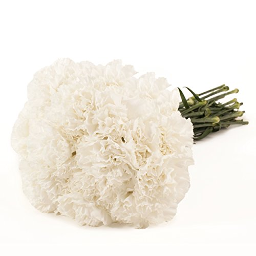 Farm Fresh Natural White Carnation - 100 Stems by Bloomingmore