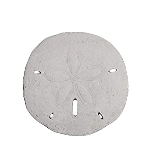 41Ljpz6efvL._SS300_ Best Sand Dollar Wall Art and Sand Dollar Wall Decor For 2020