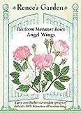 Rose - Miniature Angel Wings Seeds