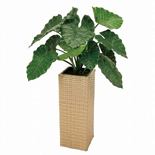 人工観葉植物 アロカシア 高さ110cm mgf5915 (代引き不可) インテリアグリーン 造花 B07SWBRHL6