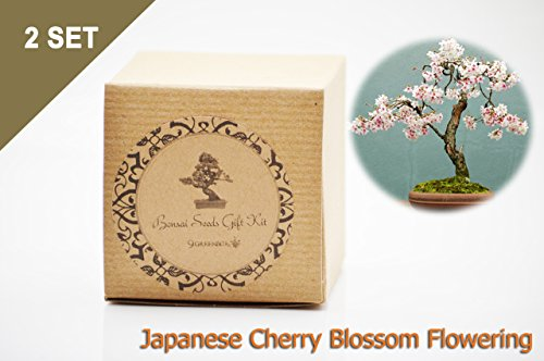 Set of 2 Japanese Cherry Blossom Flowering Bonsai Seed Kit- Gift - Complete Kit by 9GreenBox.com (Image #1)