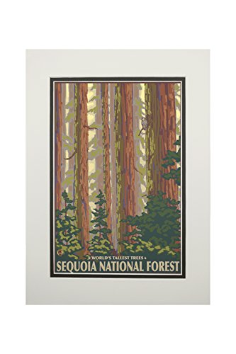 Sequoia National Forest, California - Redwood Trees (11x14 Double-Matted Art Print, Wall Decor Ready to (Sequoia Redwood Trees)