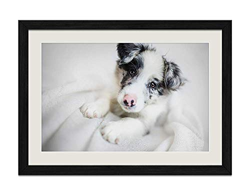 Border Frame Picture Collie - YENOYE-SM Border Collie Dog Puppy Muzzle - Picture Art Print Black Wooden Frame Framed Posters Home Deco 24x16in