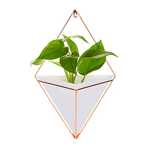 Aneil Large Hanging Planter Vase Air Plant Pot Wall Succulents Decor Container Geometric Characteristic Living Room Decorations (White,Large)