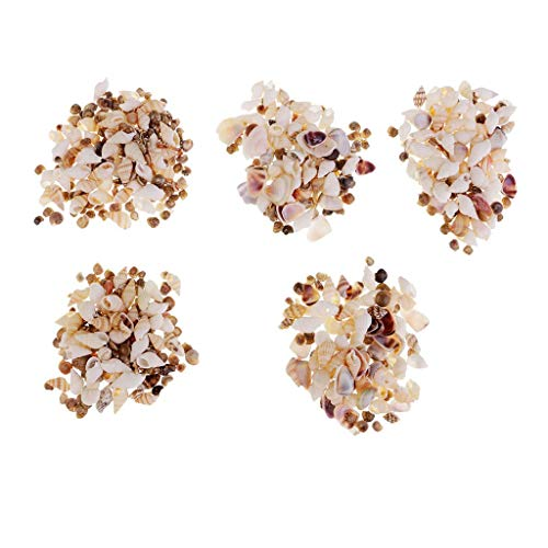 FRECI 5 Packets Resin Sea Shells for Beach Seaside Miniature Landscape Ornament Decoration for The Home Living Room, Dining Table, Bedrooms Ornament