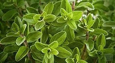 Raflesa Heirloom Culinary Herb Seeds, Marjoram, Oregano, Rosemary, Sage, Tarragon, Thyme, Rabbit Rescue Donation