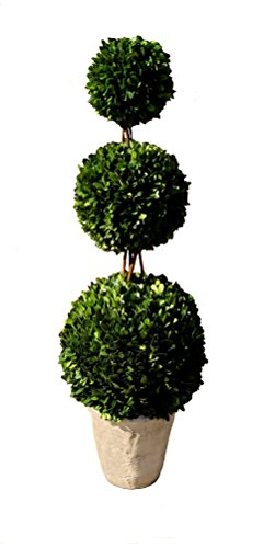 Mills Floral Boxwood Triple Ball Topiary, 36-Inch by Mills Floral