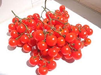 PlenTree La herencia alemana Riesentraube Tomatoâ‹100 Seedsâ‹Huge Clusters tomates cherry rojos