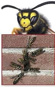 Fugenbreite 7-14 mm rostfrei aus Edelstahl Farb- und Mengenauswahl m/öglich Bienenbeisser//Sto/ßfugenl/üfter//Fugenl/üfter Fugenh/öhe 50mm 80 St/ück, Edelstahl V2A