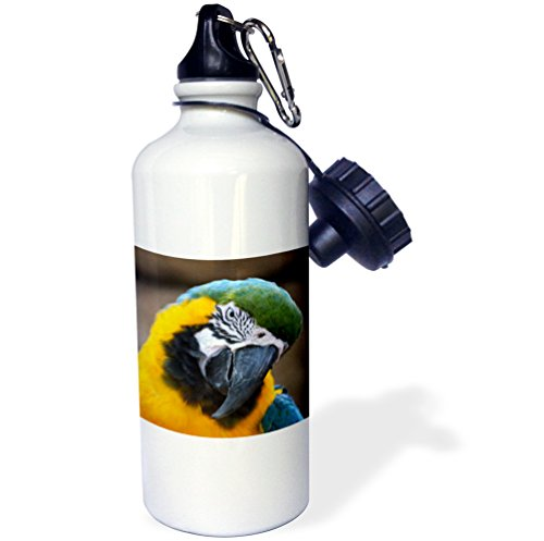 3dRose Blue Gold Parrot Macaw Head Tilted-Sports Water Bottle, 21oz (wb_178428_1), 21 oz, Multicolored