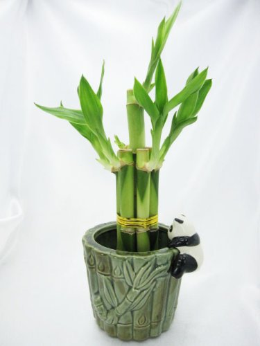 9GreenBox-Lucky-Bamboo-Ceramic-Panda-Vase