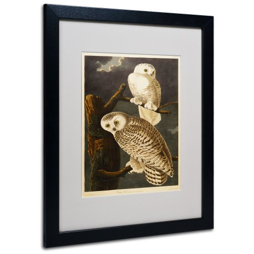 Snowy Owl Matted Artwork by John James Audubon with Black Frame, 16 by ()