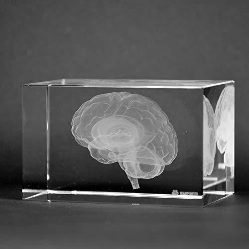 (Crystal 3D Human Brain Anatomy Neuroanatomy 1lb 2 x 2 x 3 Inches Optical Glass)