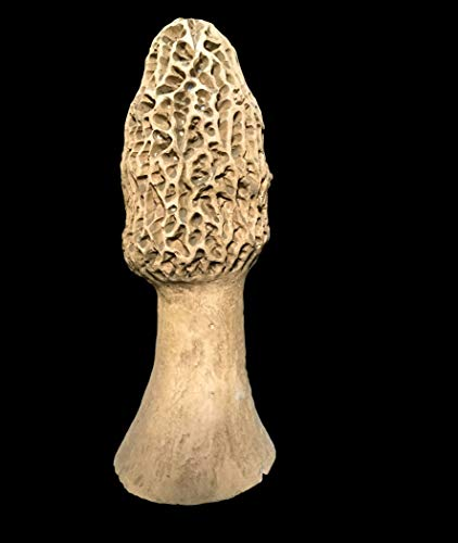 (RoadRunner Large Realistic Mushroom)