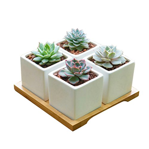 btibpse-set-of-4-ceramic-succulent-plant-pot-planter-for-office-and-home-decorate-with-bamboo-saucer