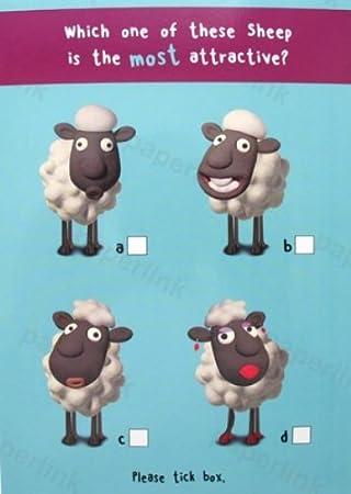 Humorous Birthday Card Plk5072 Attractive Sheep Amazon
