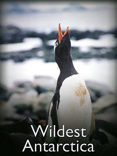 wildest-antarctica