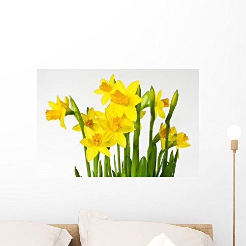 Wallmonkeys Daffodil Daffodil Wall Decal Peel and Stick Graphic WM222074 (24 in W x 16 in H)