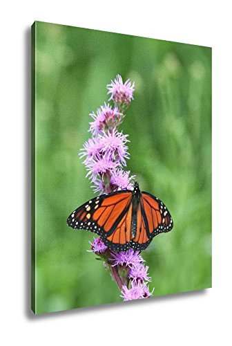 Ashley Canvas Monarch Butterfly Feeding On Pink Flower, Wall Art Home Decor, Ready to Hang, Color, 20x16, AG5660227 by Ashley Canvas