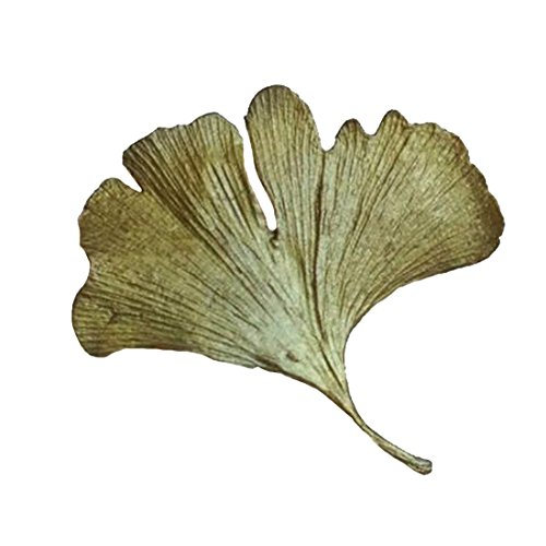 ''Gingko'' Small Pin/Brooch by Michael Michaud for Silver Seasons… by Michael Michaud