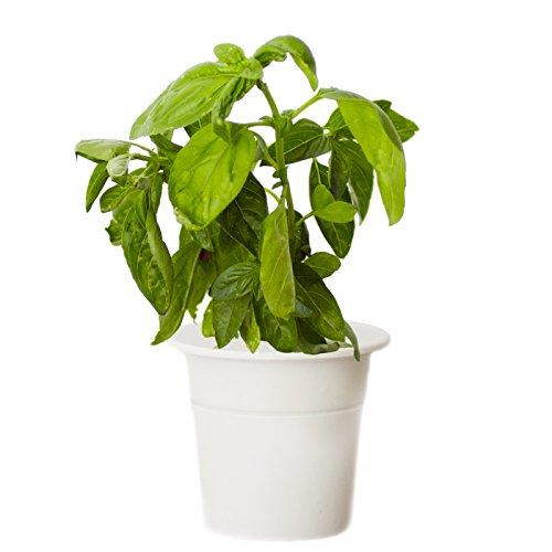 Click & Grow Smart Herb Garden Basil Refill Cartridge by Click & Grow