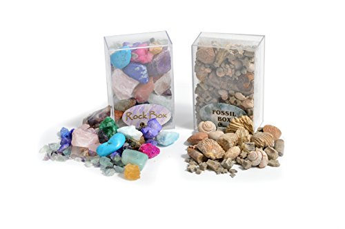 Fossil & Rock Box Set - Set of 2 Boxes! Great Starter Kit for The Junior Collector